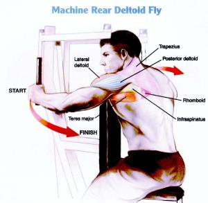 Machine-Rear-Deltoid-Fly