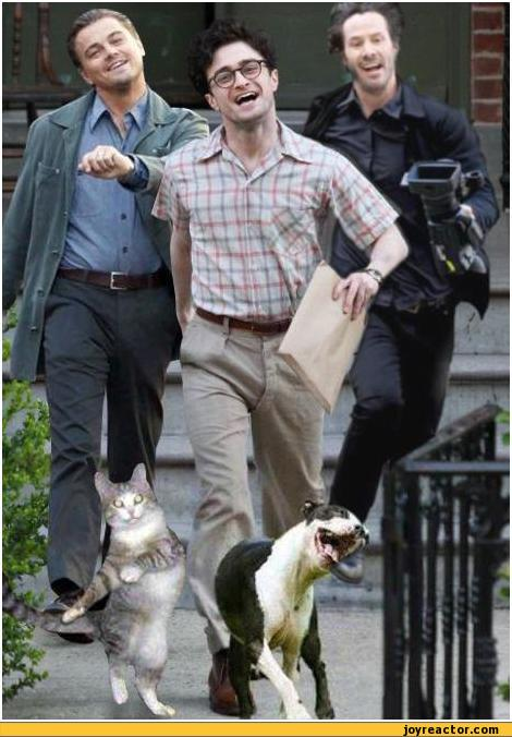 auto-Harry-Potter-strutting-leo-memes-197330