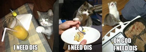 i-need-dis-cat-1024x366