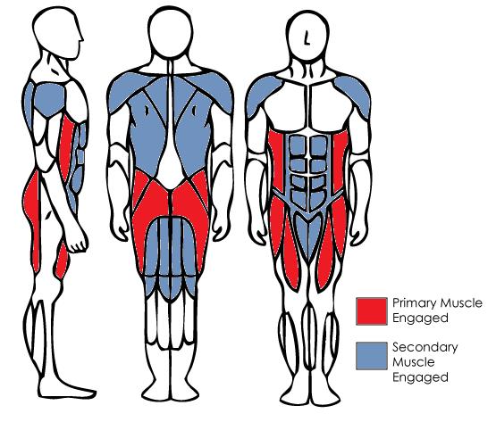 MuscleAnatomyKettleBellSwing